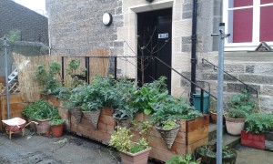 One of the secret gardens of Leith! Photo: AnnVixen