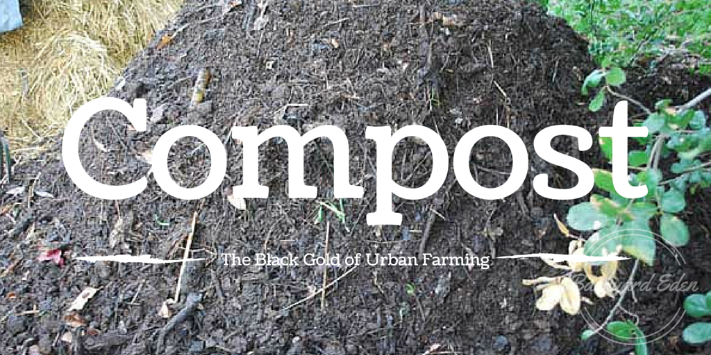Compost – the black gold of urban farming  No019