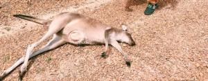 Kangarou in Walpole with Artur Kurancinski 12662678_10153497494344220_5775926924040925267_n