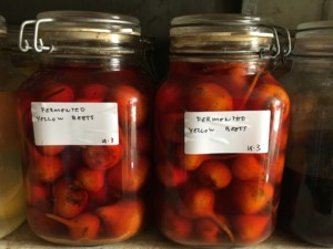 Faviken fermented beats. Photo: AnnVixen TellusThinkTank.com