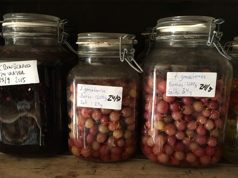 Conserved berry beauty á la Faviken. Photo: AnnVixen TellusThinkTank.com