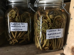 Fiddlehead fern in glas jar in Faviken's root cellar. Photo: AnnVixen TellusThinkTank.com