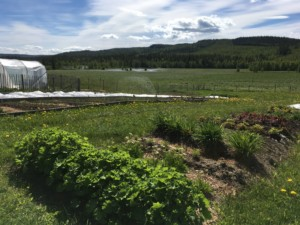 Faviken's fishpond and kitchen garden. Photo: AnnVixen TellusThinkTank.com
