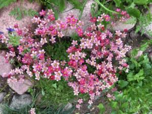 img_0714-blommor-i-rabatten