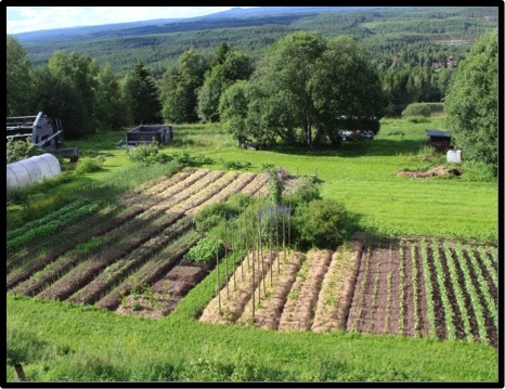 Self-containing garden – is it possible? No029